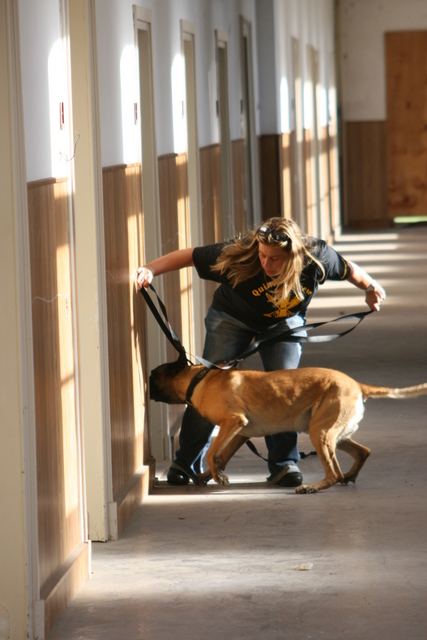 honden-training-bleijerheide-007-001