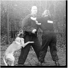 hondengeleiding
